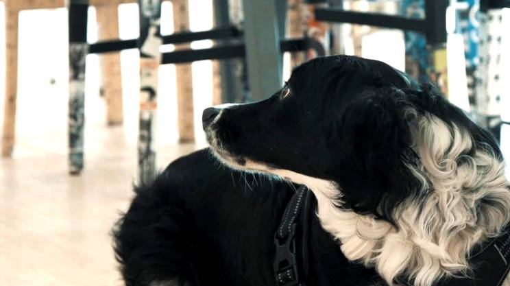 Aria, il cane di Maurizio Canetta