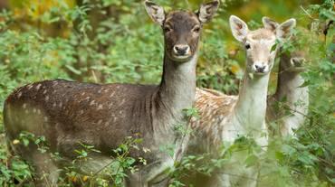 Condannato a guardare Bambi