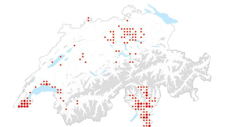 La distribuzione del Trachycarpus fortunei in Svizzera