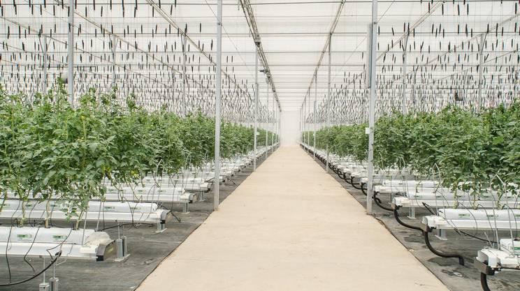 L'agricoltura idroponica è... il futuro