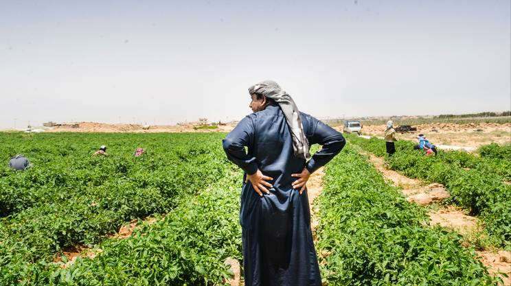 L'agricoltura tradizionale in Giordania ha i giorni contati