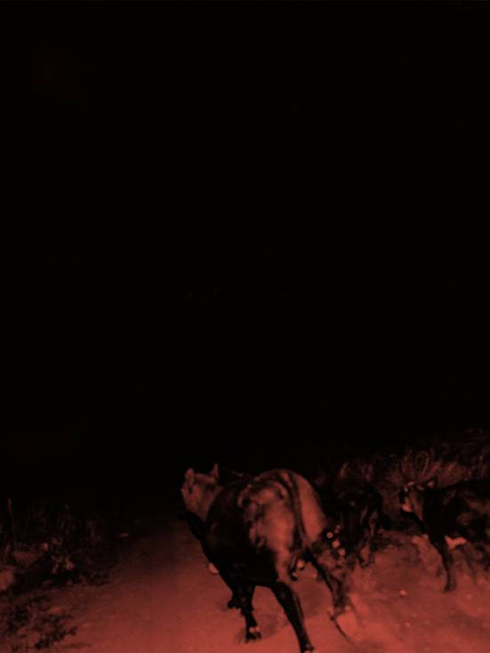 Bateh sulle orme di Nick Cave