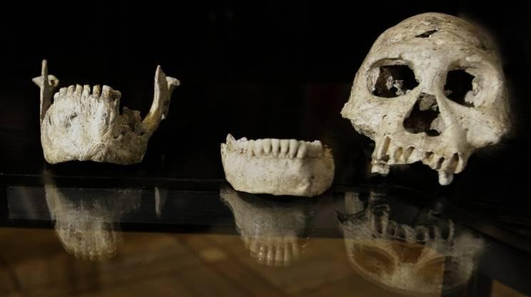 I crani di Dmanisi, Georgia (Keystone)