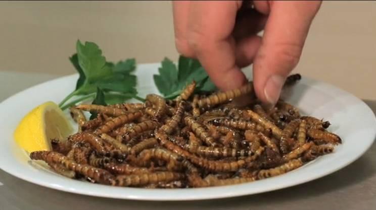 Come eliminare gli insetti nella dispensa i rimedi naturali leitv