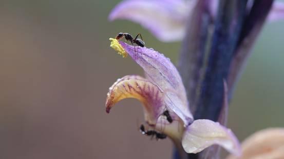 Le orchidee dove meno te le aspetti
