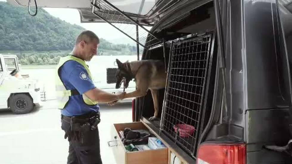 Due cani contro il traffico di animali
