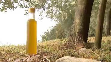"""Raccolta e spremitura in una sola gioranta per """"L'or da Gandria"""", l'olio d'oliva tutto ticinese"""