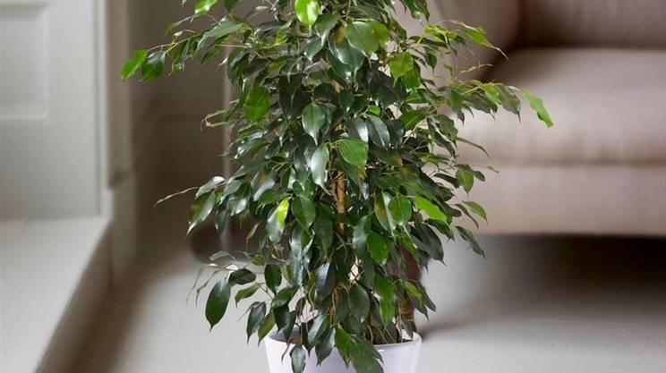 6 piante che purificano l 39 aria di casa rsi radiotelevisione svizzera - Piante che purificano l aria in casa ...