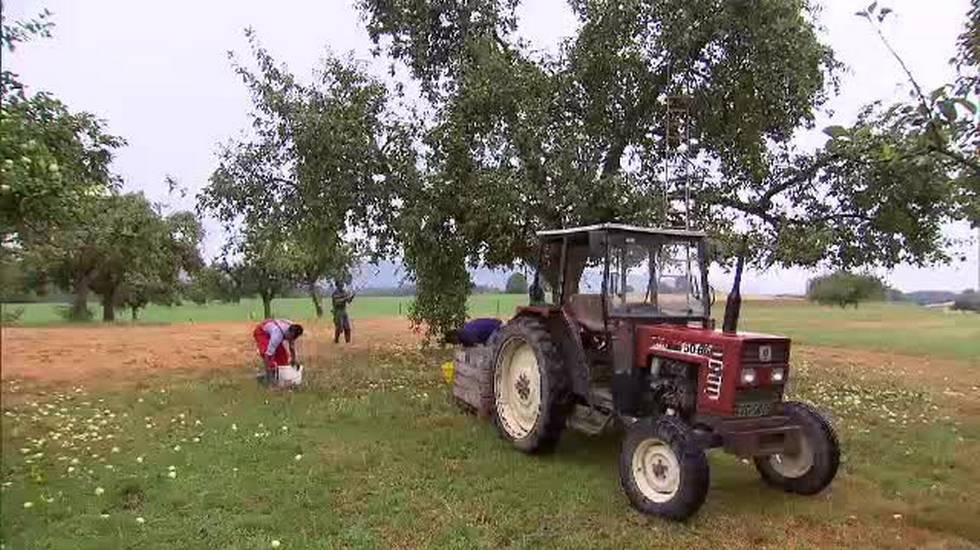Rifugiati utili all'agricoltura