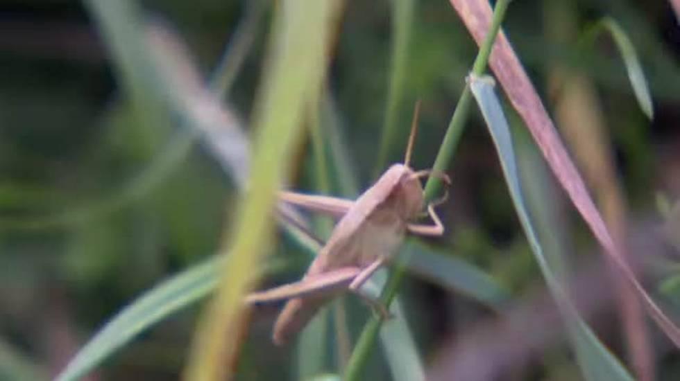 La strage degli insetti