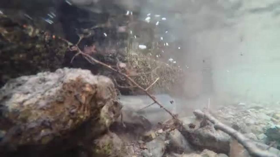 Anguilla pesce dell'anno
