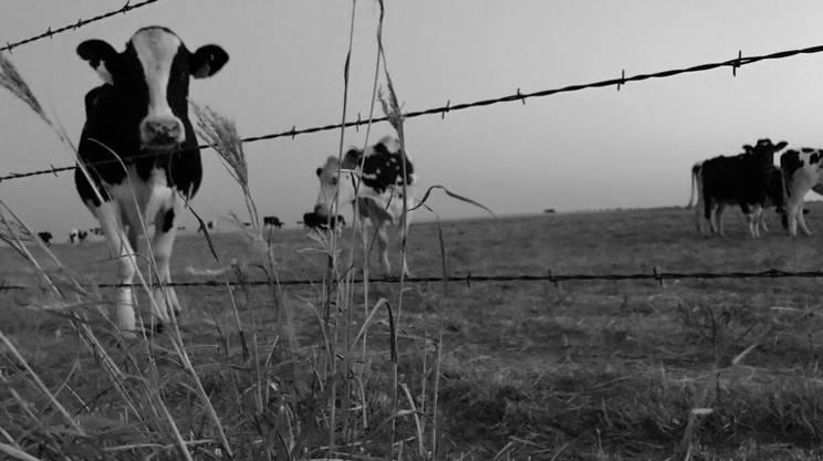 I capi di bestiame sono sparpagliati nelle enormi proprietà che orlano la Statale 84 in direzione sud