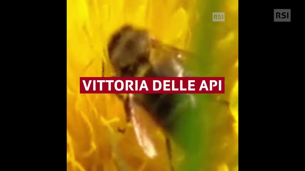 Le api ringraziano