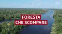 Sempre meno foresta in Brasile