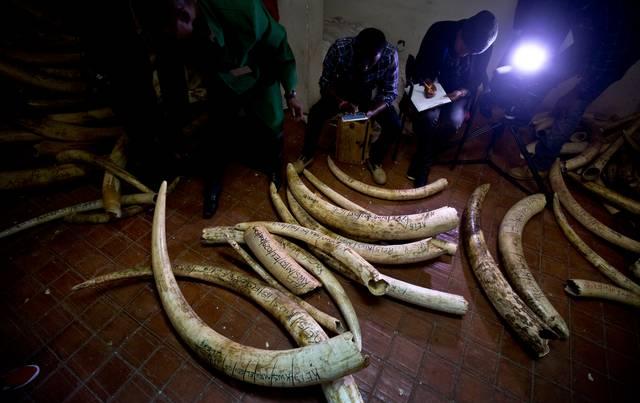 Il tentativo di riaprire il mercato legale dell'avorio è stato respinto, ma –grazie al veto della Namibia- è stato pure affossata una proposta che, se adottata, avrebbe reso permanente il bando al commercio internazionale di avorio.
