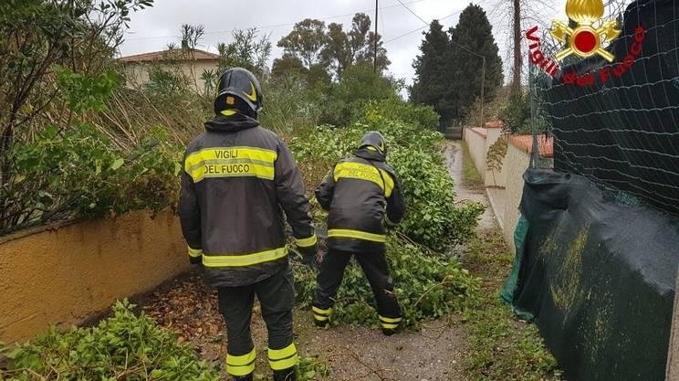 Il vento violento lunedì ha sradicato alberi e provocato danni pure sull'isola d'Elba