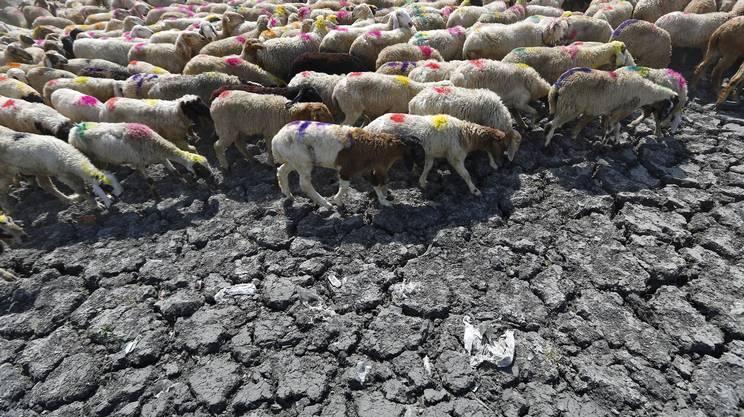 Il caldo fa strage in india rsi radiotelevisione svizzera for Nei progetti domestici di terra