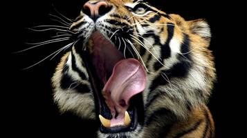 Caccia alla tigre a Parigi
