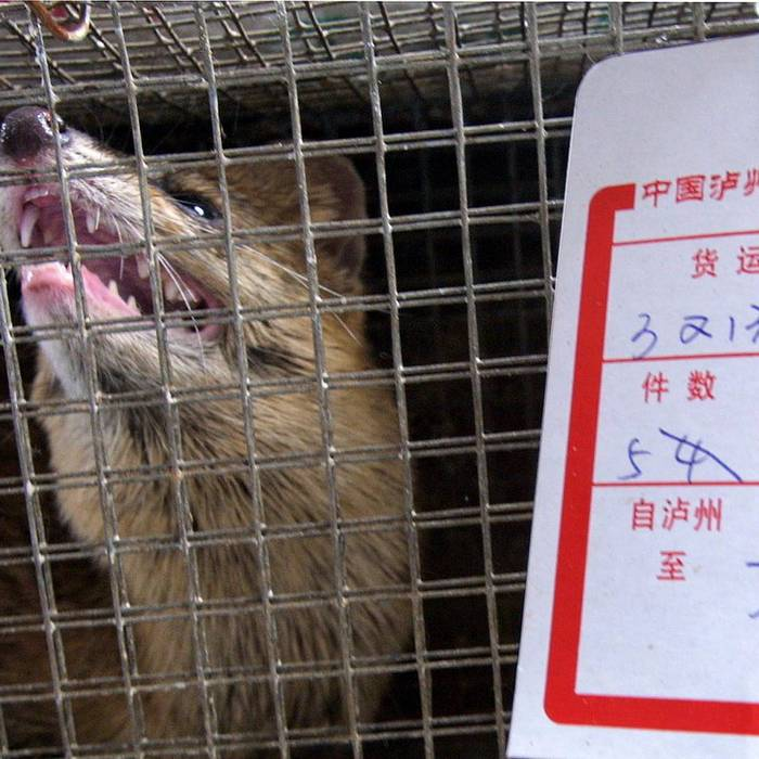 Un analisi è in corso d'opera per capire come le varie nazioni gestiscono gli animali confiscati. Non sempre i paesi sono attrezzati e di conseguenza gli animali sequestrati a volte rischiano di morire, essere soppressi o finire nuovamente nelle mani dei trafficanti.