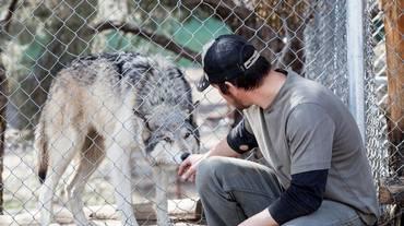 Salvarsi tra uomini e lupi