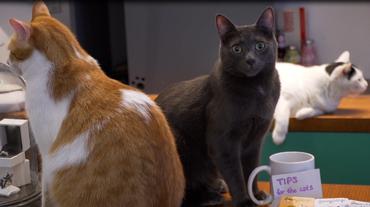 I gatti, signori del mondo