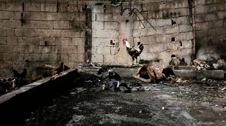 Il campo di Minieh, a Sud della città di Tripoli, è stato incendiato a fine dicembre. Si è salvato solo un gruppo di galline del pollaio.