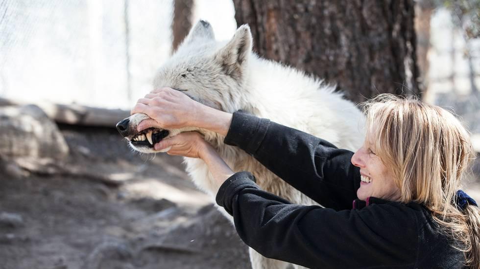Vita al LARC Animal Rescue Centre