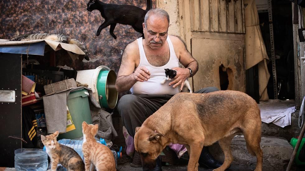 Gli amati gatti di Ramazan a Istanbul