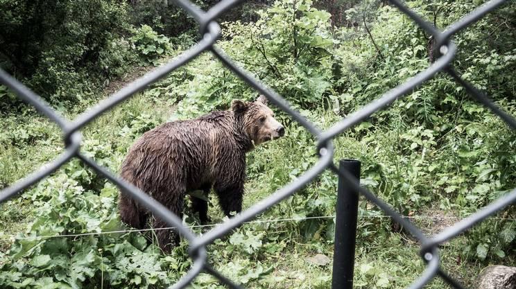 """Il parco degli """"ex"""" orsi danzanti di Belitsa in Bulgaria"""
