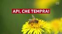 Le api sono sopravvissute