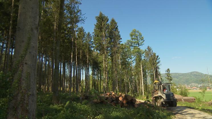 In prospettiva, sensibili ripercussioni per l'economia forestale
