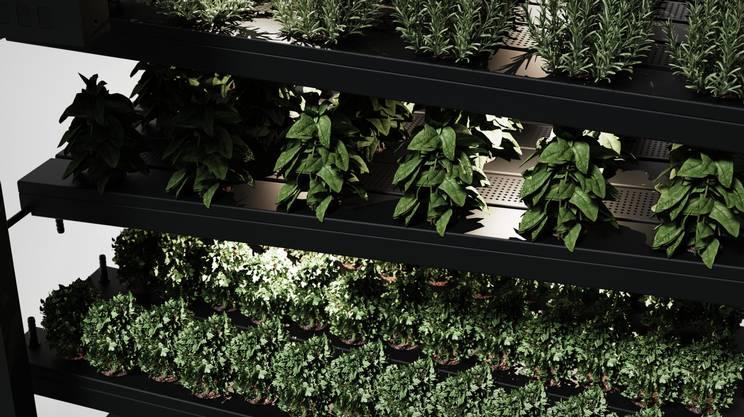La coltivazione si basa sulla tecnica di agricoltura idroponica