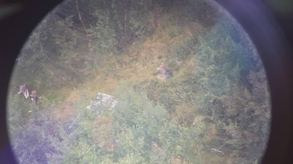 Val Morobbia: mamma lupa gioca coi piccoli