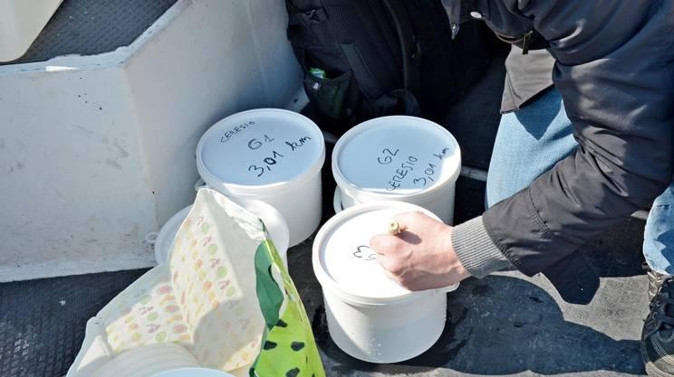 La raccolta dei campioni