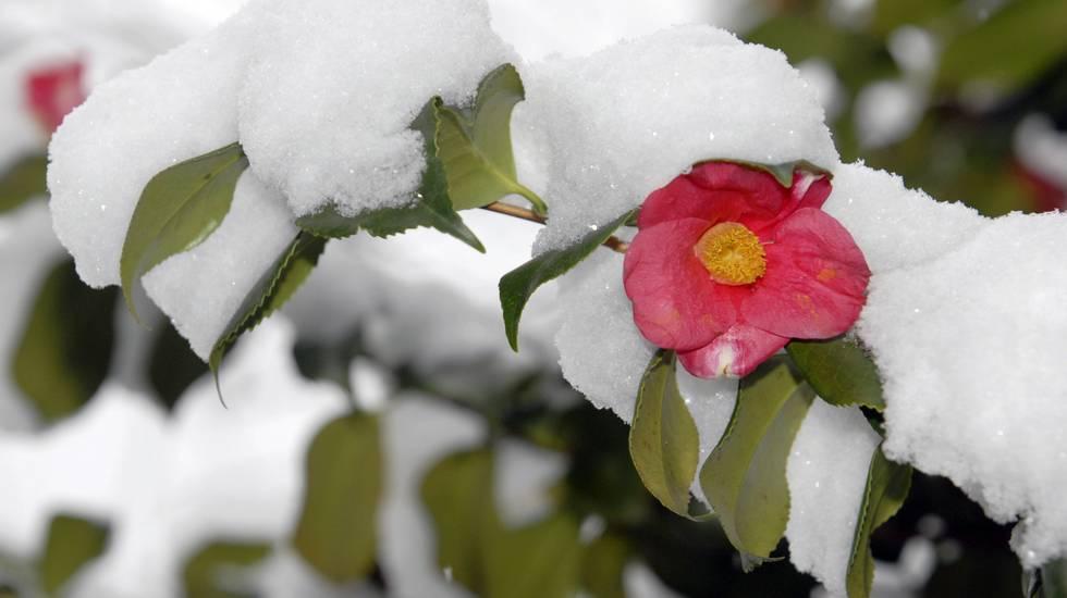 Altra neve in arrivo ma...