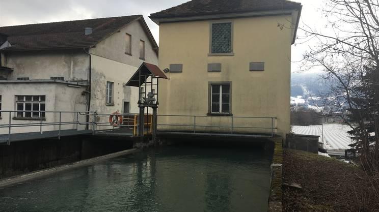 Cervi salvati dalle acque rsi radiotelevisione svizzera - Lo specchio retrovisore centrale ...