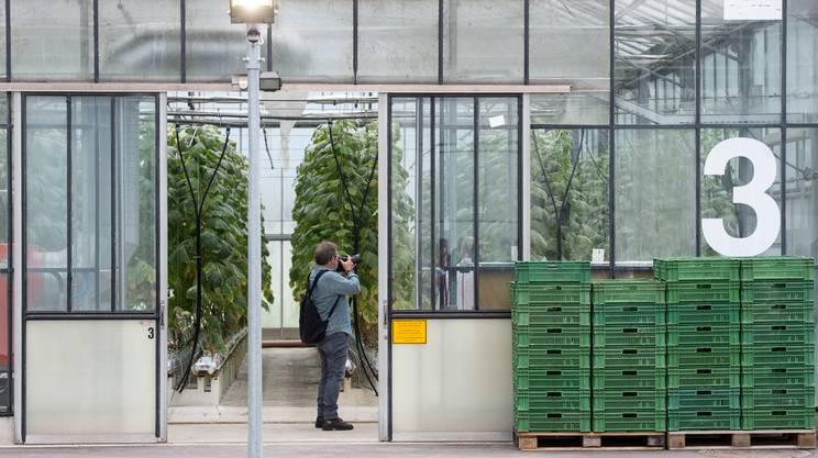 Una delle serre dove vengono studiate strategie di lotta biologica con stimolazione di difese naturale delle piante