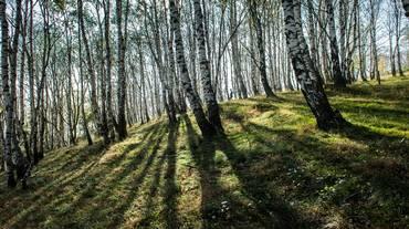 L'arte nel bosco in Capriasca