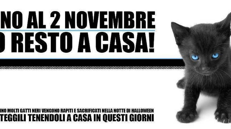 Delizioso Costume da Gatto per Bambini / Nero-Viola in Taglia L, 10 - 12 Anni, 145 - 158 cm / Vestito da Gatto micio per Bambine / Adatto a Feste di Carnevale.