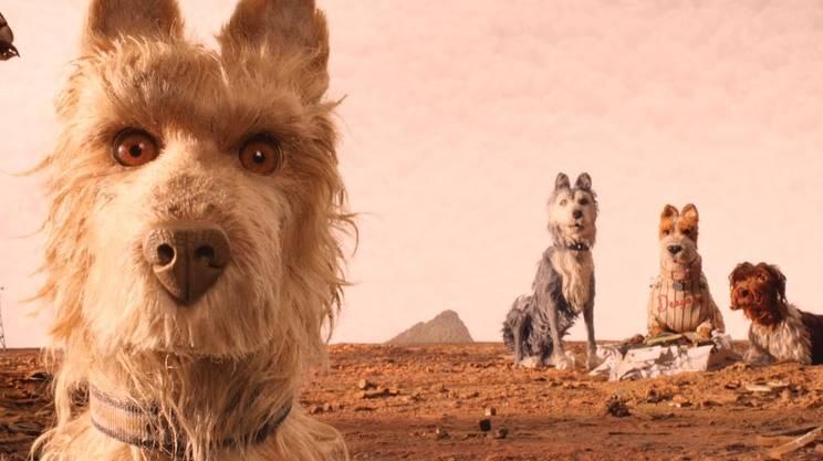 I cani nell'isola dell'immondizia