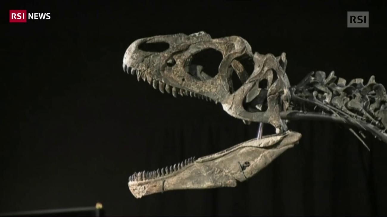 metodi utilizzati dagli scienziati per la datazione fossile