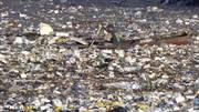 Un continente di rifiuti