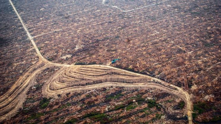 Olio di palma causa di deforestazione