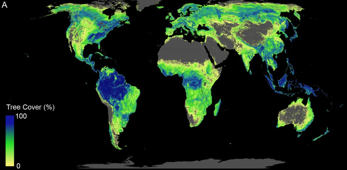 Le foreste sulla Terra