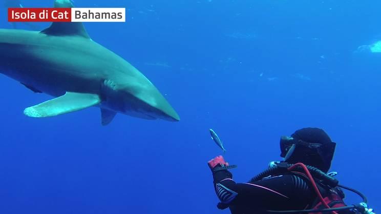 Anche lo squalo dice grazie