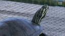 Una nuova casa per le tartarughe