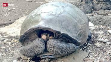 Galapagos, nuova tartaruga