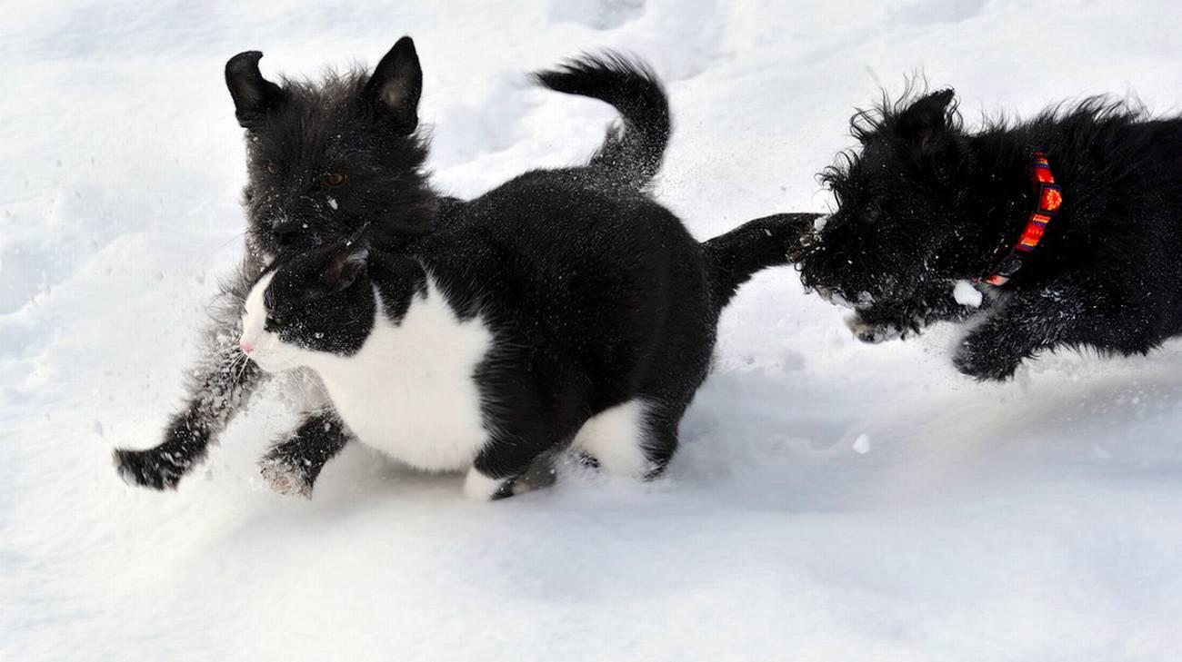Cani E Gatti Sono Più Longevi Rsi Radiotelevisione Svizzera