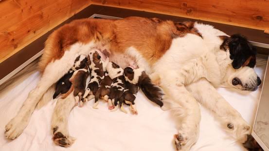 Sono nati quindici cuccioli