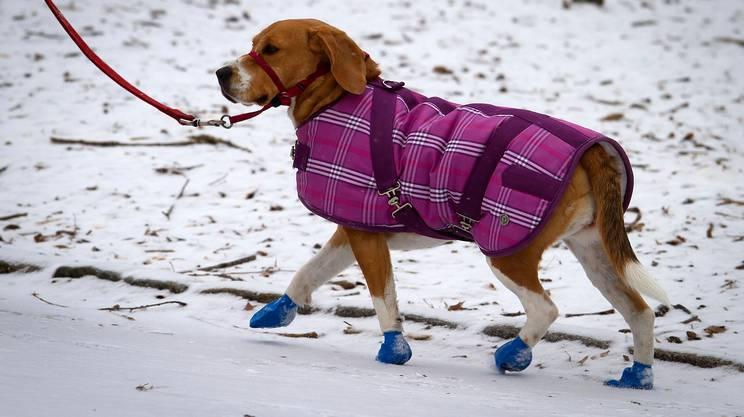 Gli stivaletti evitano gravi danni ai cuscinetti delle zampe e il cane ringrazia